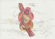 Cardinals Drawings - Janes Cardinals by Judith Rice
