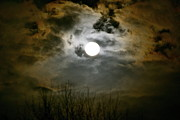 Sue Mcglothlin Posters - January wolf moon Poster by