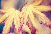 Maple Photographs Posters - Japanes Maple Leaves with Texture Effect Poster by Natalie Kinnear