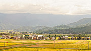 Bucolic Scenes Photos - Japanese autumnal countryside with yellow rice fields by David Hill