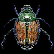 Japanese Beetle Bedazzled Print by R  Allen Swezey