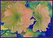 Cherry Blossoms Photo Originals - Japanese Cherry Blossoms - Pop Art by Dora Sofia Caputo