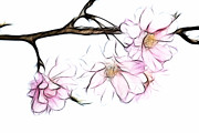 Kathy Clark - Japanese Cherry Fractal