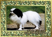 Japanese Chin Prints - Japanese Chin Dog Christmas Print by Olde Time  Mercantile