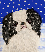 Japanese Chin Framed Prints - Japanese Chin in Snow Framed Print by Karen Howell