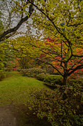 Japanese Maple Posters - Japanese Garden Grove Poster by Mike Reid