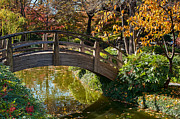 Autumn Scene Prints - Japanese Garden in Fall Print by Iris Greenwell