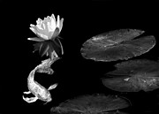 Koi Ponds Photos - Japanese Koi Fish and Water Lily Flower Black and White by Jennie Marie Schell