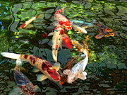 Green Orange Posters - Japanese Koi Fish Pond Poster by Jennie Marie Schell
