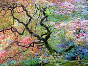 Moss Greeting Cards Prints Posters - Japanese Maple Poster by Wendy McKennon
