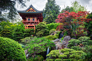 Adam Romanowicz - Japanese Tea Garden - Golden Gate Park