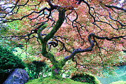 Athena Mckinzie Art - Japanese Tree in Garden by Athena Mckinzie