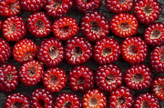 Berry Posters - Japanese Wineberry Pattern Poster by Tim Gainey
