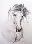 Animals Drawings - Jaqueton X by Janina  Suuronen