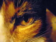 Golden Eye Cat Photos - Jasmine by Diane Goulart