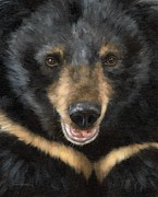 Rachel Stribbling - Jasper Moon Bear - In...