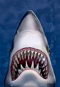 White Shark Digital Art Prints - Jaws Great White Shark Art Print by Walt Curlee
