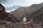Arabs Photos - Jebel Toubkal by Daniel Kocian