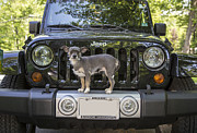 Off Road Framed Prints - Jeep Dog Framed Print by Edward Fielding