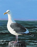 Jack Skinner - Jeff The Seagull