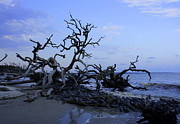 Cypress Stump Photos - Jekyll Beach by Laurie Perry