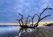 Tree Roots Photos - Jekyll Island Seascape by Debra and Dave Vanderlaan