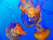 Ocean Creatures Photos - Jellyfish III by Elizabeth Hoskinson