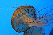 Fish Art - Jellyfish - National Aquarium in Baltimore MD - 121225 by DC Photographer