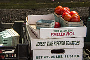 Farm Stand Posters - Jersey Tomatoes for Sale Poster by Lois Wilkes