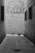 Squared Originals - Jerusalems cat by Franz Gustincich