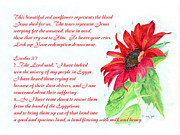 Jesus Mixed Media Framed Prints - Jesus Wept Red Sunflower with Verse Framed Print by Linda Ginn