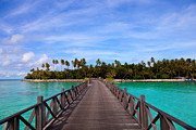 Sabah Posters - Jetty on tropical island Poster by Fototrav Print
