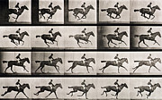 Black And White Prints Prints - Jockey on a galloping horse Print by Eadweard Muybridge