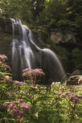 Buttermilk Falls State Park Framed Prints - Joe Pye Weed For Pat Framed Print by Michele Steffey
