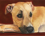 Dog Print Pastels Framed Prints - Joey - Rescued Street Dog Framed Print by Sarah Dowson