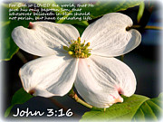 John 3-16/dogwood Legend Print by Kathy  White