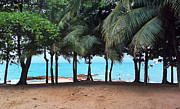 Paul Rainwater Art - Jomtien Beach Trees 2 by Paul Rainwater