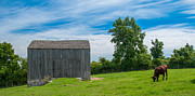 Farmlife Photos - Jones Farm 17811c by Guy Whiteley