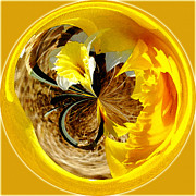 Jeff Mcjunkin Metal Prints - Jonquil Orb I Metal Print by Jeff McJunkin