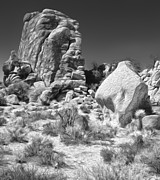 Joshua Tree - 14 Print by Gregory Dyer