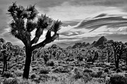 Mars Black Framed Prints - Joshua Tree Black and White Framed Print by Benjamin Yeager