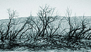 Gregory Dyer - Joshua Tree - Burned out Trees