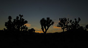 David Yunker Framed Prints - Joshua Tree Dusk Framed Print by David Yunker