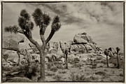 Eugene Dailey - Joshua Tree
