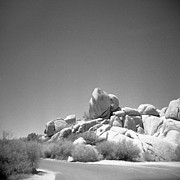 Holga Camera Prints - Joshua Tree Holga 3 Print by Alexander Snay