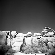 Holga Camera Prints - Joshua Tree Holga 4 Print by Alexander Snay