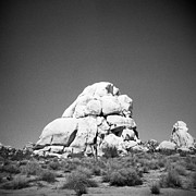 Holga Camera Prints - Joshua Tree Holga 9 Print by Alexander Snay