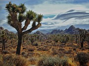 Joshua Tree National Park Framed Prints - Joshua Tree Landscape Framed Print by Benjamin Yeager