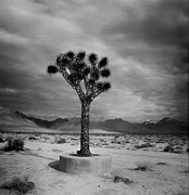 Roland Peachie - Joshua Tree Metal...