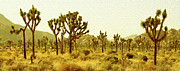 Grass Prints - Joshua Tree National Park Print by Ben and Raisa Gertsberg